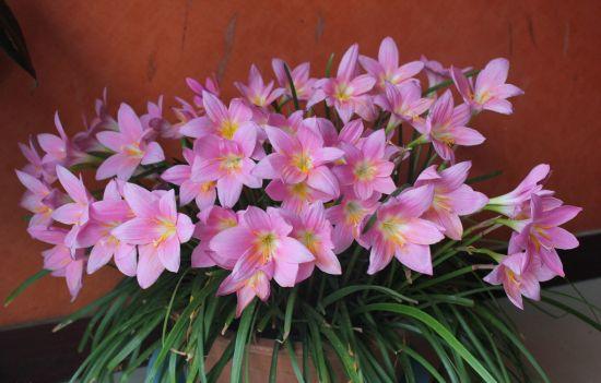 盆养花卉需勤施肥