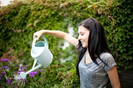 夏天给植物浇水的正确姿势