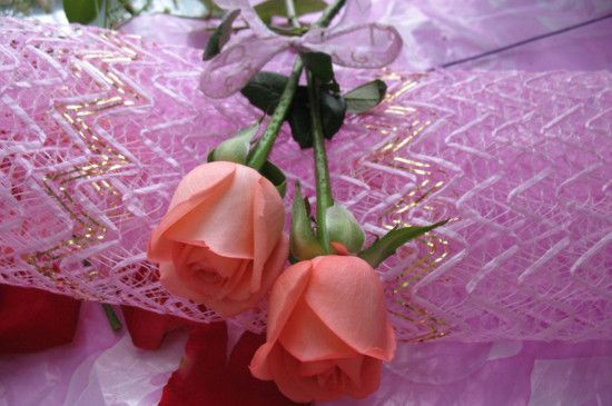 <b>2朵粉玫瑰代表什么意思?你侬我侬这世上只有你我</b>