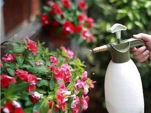 浇水方法有讲究