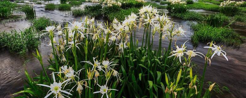 哪种花象征虚荣?十种花语象征虚荣的花卉