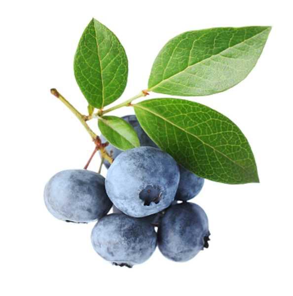 蓝莓树苗怎么种植