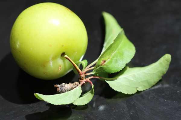 丑苹果是转基因吗,如何识别转基因苹果
