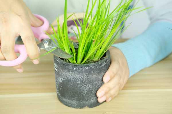 菖蒲的养殖方法及注意事项