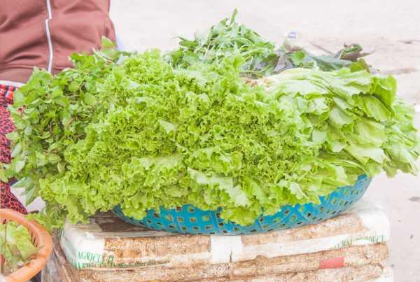 生菜怎么种植容易发芽
