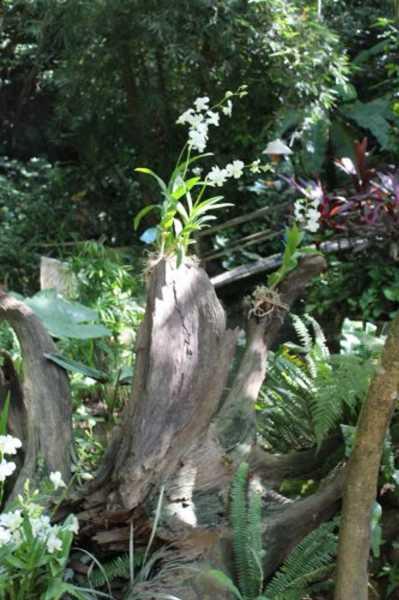 石斛兰的病虫害防治方法