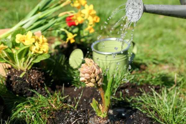 """浇水是个""""老大难""""!花盆里插几根吸管,能轻松不少"""
