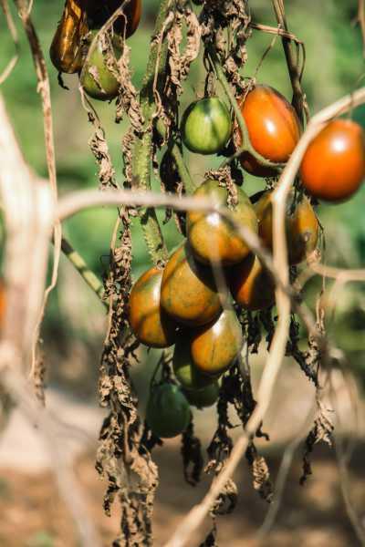 番茄怎么做好吃,番茄怎么去皮
