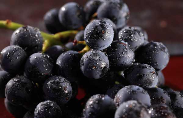 葡萄扦插苗几年能结果,扦插苗的后期管理