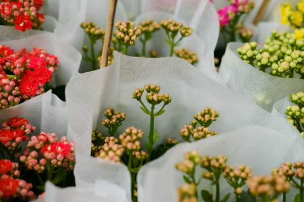 长寿花什么时候开花,长寿花图片