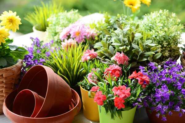 为什么卧室不能养花