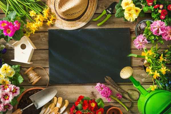 盆栽春兰的养殖方法和注意事项
