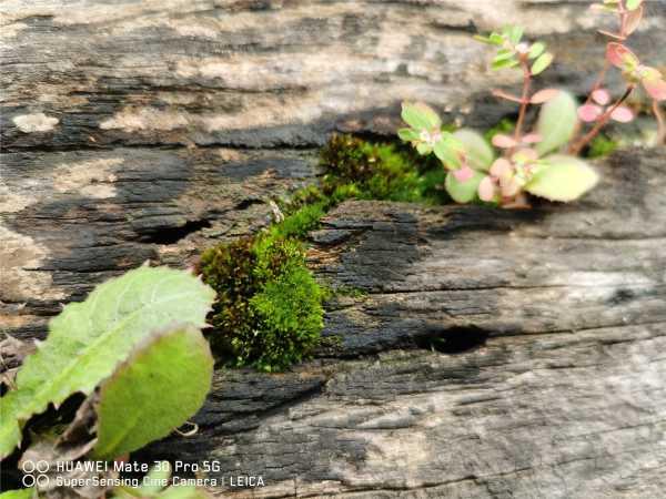 苔藓是怎么形成的,怎么让花盆里长苔藓