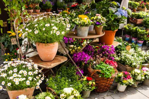 植物的药害及其处理