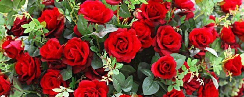 <b>玫瑰花放在水里怎么养?玫瑰水培的方法步骤</b>