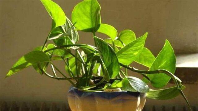 <b>重庆办公室植物租赁推荐</b>