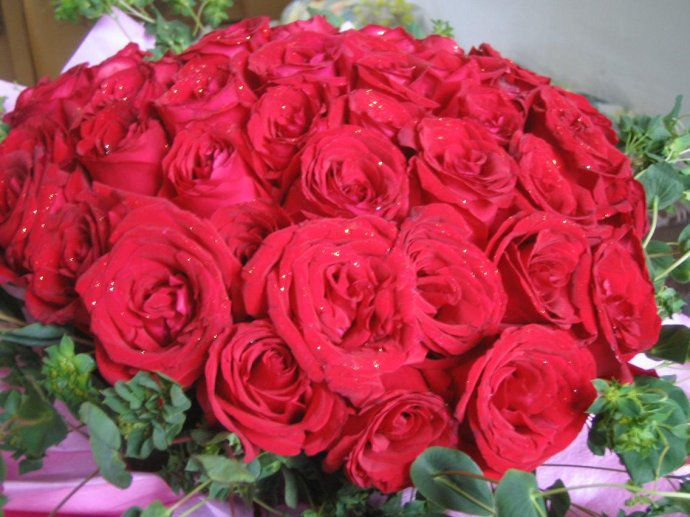 <b>56朵玫瑰代表什么意思:吾爱/为爱向前一步</b>